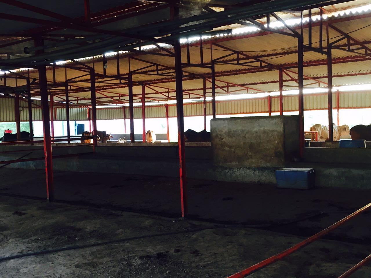a2 dairy farm