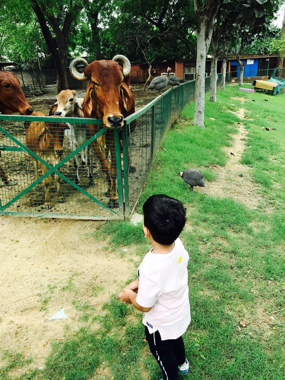a2 milk farming